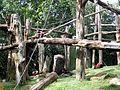 Singapore Zoo - panoramio (4).jpg