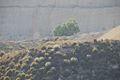 Siur Carmel Nov 06 2010 056.JPG