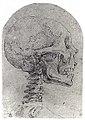 Skull in Profile MET sf-rlc-1975-1-326.jpeg
