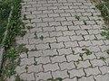 Slaný (0362).jpg