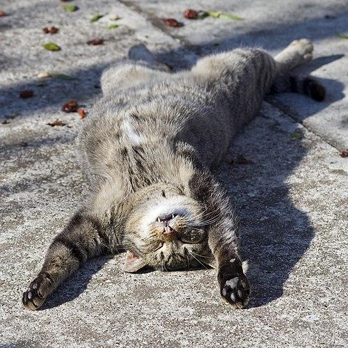Sleeping cat on her back.jpg