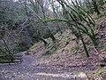 Sloughan Glen - geograph.org.uk - 1176736.jpg