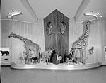 Smithsonian Institution Archives - MNH429.jpg