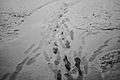 Snow Footprints (15187864764).jpg