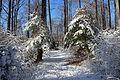 Snowing 124.JPG