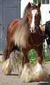 Solid chestnut coloured Gypsy Cob Horse 2.jpg