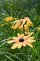 Something flower (3675522817).jpg