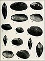South American Naiades - a contribution to the knowledge of the freshwater mussels of South America (1921) (14755841056).jpg
