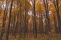 South Undermountain Road Forest (29870340573).jpg