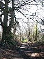 Southeast towards Millhill Plantation - geograph.org.uk - 745621.jpg