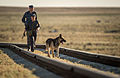Soyuz TMA-09M spacecraft roll out by train 3 - bomb sniffing dog.jpg