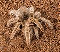 Spider42.jpg