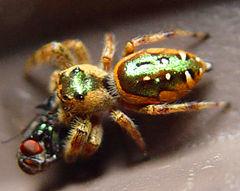 240px spider 001