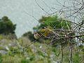 Spotted flycatcher - Flickr - ImogenX.jpg
