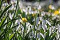 Spring flowers (33503972256).jpg