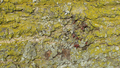 Spring lichens 09.png