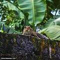 Squirrels everywhere in sri lanka.jpg
