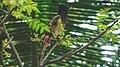 Sri Lankan Bird.jpg
