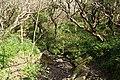 St Gennys, Coxford stream - geograph.org.uk - 1267861.jpg