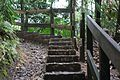 Stairs in El Yunque National Forest.jpg