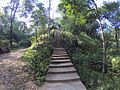 Stairs in the forest.jpg