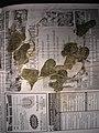 Starr-050326-5272-Coccinia grandis-voucher 050223 3-Popoia-Oahu (24114127553).jpg