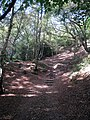 Steps to Leith Hill - geograph.org.uk - 1509759.jpg