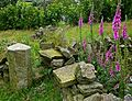 Stile and foxgloves (2679979401).jpg