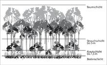 tropischer regenwald wikipedia. Black Bedroom Furniture Sets. Home Design Ideas