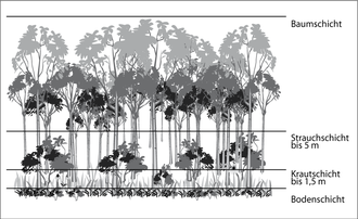 Stratification (vegetation) - The vertical stratification of a community is determined largely by the life forms of plants their size , branching and leaves which is influenced by the vertical gradient of light.   Vertical classification of vegetation in a forest showing the tree, shrub and herbaceous layers and the forest floor