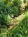 Stromend beekje Flowing stream (4831300867) (3).jpg