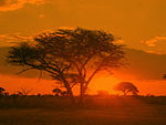 A leafless tree partially obstructs a sunrise over a large field.