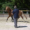 Swiss national stud farm Avenches-IMG 8515.jpg