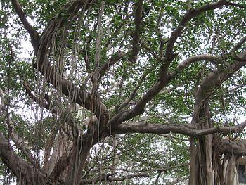 TREE VIEW.jpg