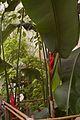 TU Delft Botanical Gardens 61.jpg