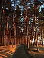 Tallinn (33610339813).jpg