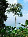 Tayap-Végétation (8).jpg