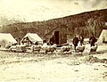 Team of Angora goats used to haul sled near Skagway, Alaska, spring 1898 (MEED 17).jpg