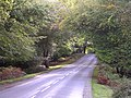The B3078 through Brook Wood, New Forest - geograph.org.uk - 62993.jpg