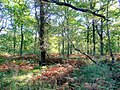 The Forest of Dean at Stonyhill Green - geograph.org.uk - 1532954.jpg