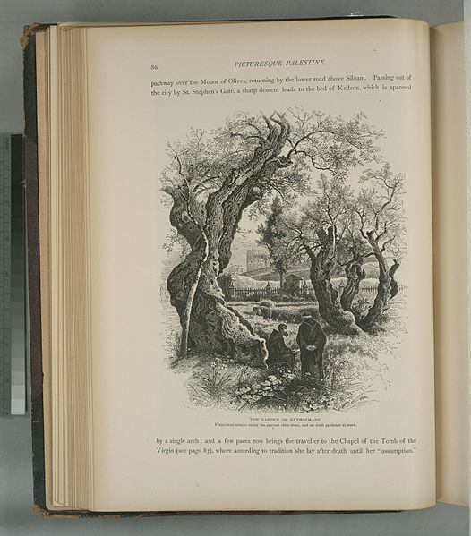 File The Garden Of Gethsemane Franciscan Monks Under The Ancient Olive Trees And An Arab