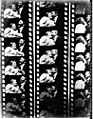 The Kiss 1896 Film Strip.jpg