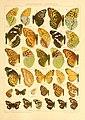 The Macrolepidoptera of the world (Taf. 71) (8145266417).jpg
