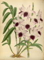 The Orchid Album-01-0062-0020.png