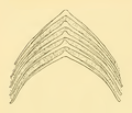 The Osteology of the Reptiles-138 iujhg kiujhb kjhb fg g.png