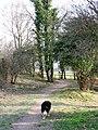 The Ridgeway starts to climb up Aldbury Nowers - geograph.org.uk - 1347754.jpg