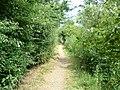 The Thames Path near Culham - geograph.org.uk - 19987.jpg