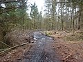The clearing of Peat Pits Wood - geograph.org.uk - 1740666.jpg