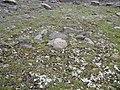 The lichen growing on the rocks. July 2007. - Лишайник, растущий на камнях. Июль 2007. - panoramio.jpg