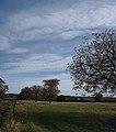 The ornamental avenue of Trees (geograph 5939116).jpg